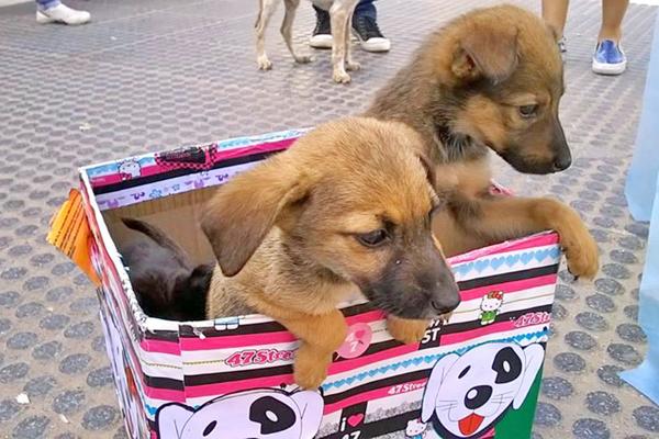bingo_solidario_mascotas