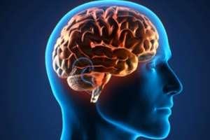 proteger funciones cerebro
